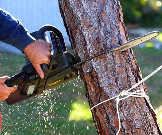 Спил деревьев в Саранске и Республике Мордовия