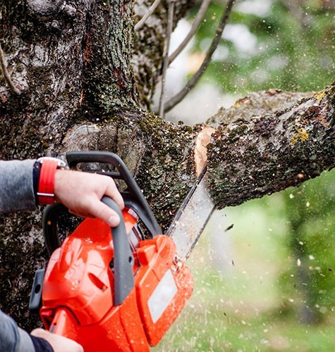 Услуга по спиливанию деревьев в Саранске